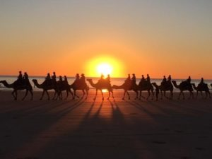 "BEST OVERALL, Suzanne Frye, ""Sunset Camel Ride in Broome."" Broome is on the coast of Western Australia. They have dramatic sunsets there, and it is popular to take a camel ride at sunset. Date- July 29, 2015"