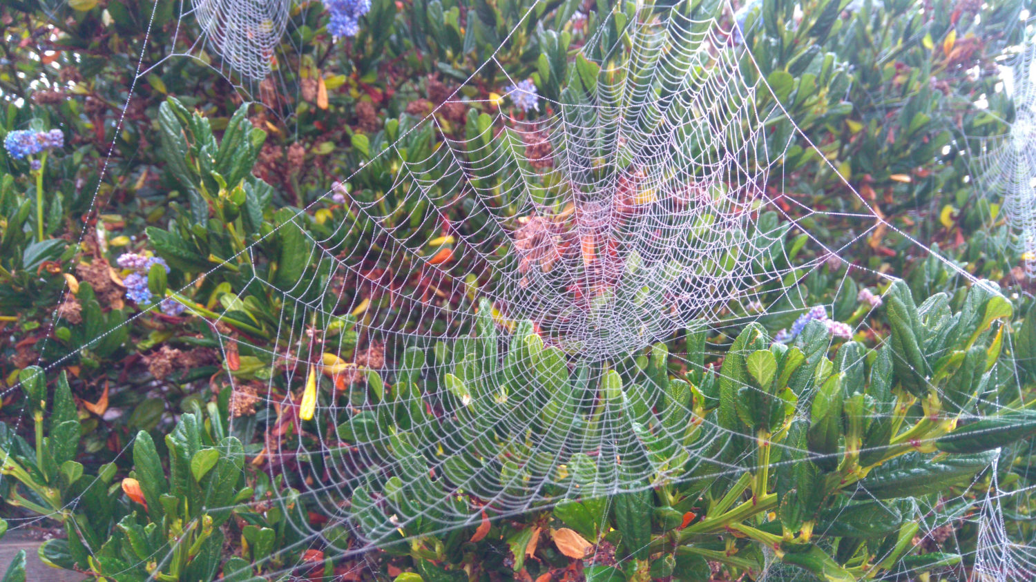 This image has an empty alt attribute; its file name is van-Bentum-Spider-Web-After-Morning-Dew-1500x843.jpg